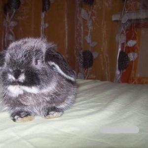 Продаются крольчата элитной породы