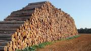 Продаю лес (кругляк) хвойных и других пород