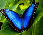 Продажа Живых тропических бабочек из Кении более 30 Видов